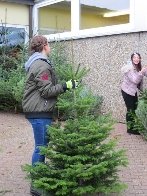 Großer Weihnachtsbaumverkauf an der VS Faulbach